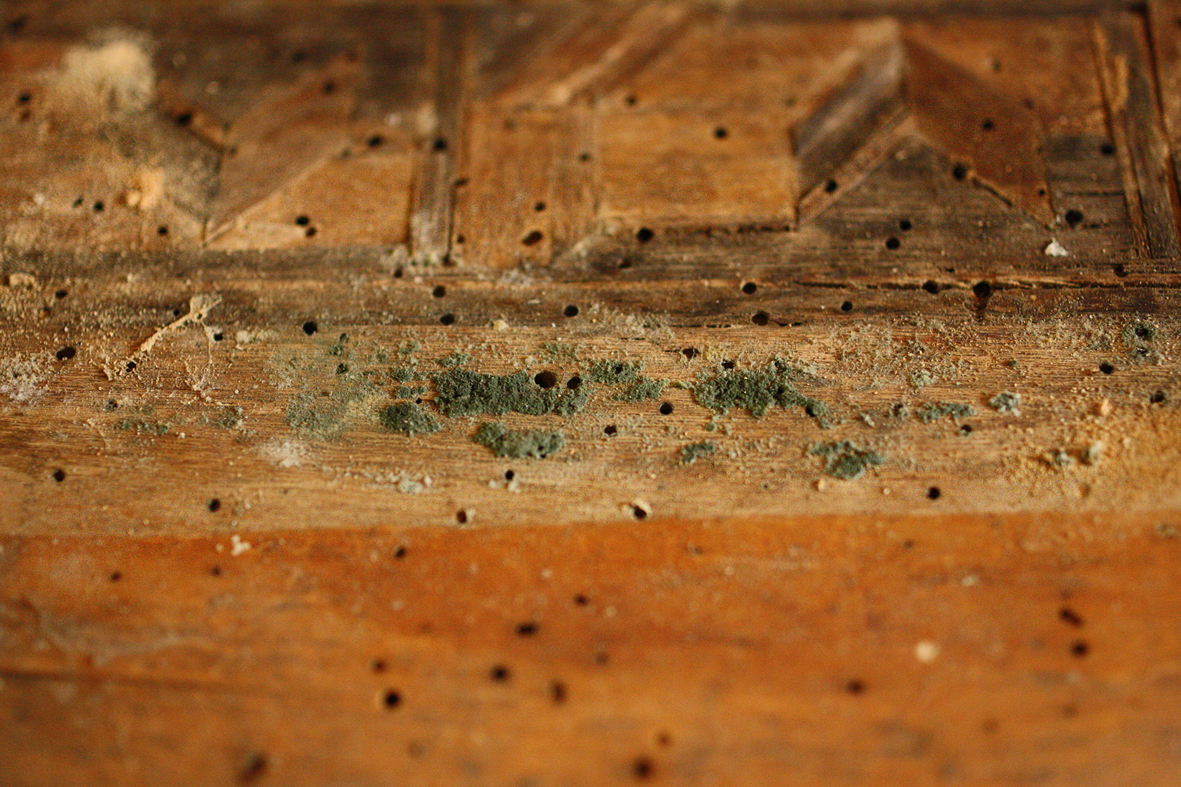 Wooden work piece with traces of infestation by insects and microorganisms, Tobsdorfer choir stalls, photo: HAWK