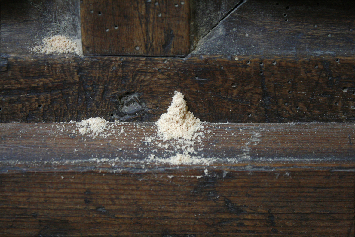 Piles of wood flour as a sign of active insect infestation, Bogeschdorf choir stalls, photo: HAWK